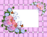 Pink orchids border Royalty Free Stock Photos