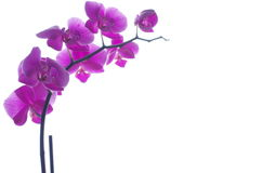 Pink orchids in daylight Stock Photo