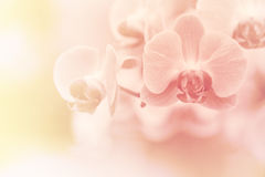 Pink Orchids flower Stock Photo