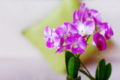 Pink orchids in the interior Stock Photo