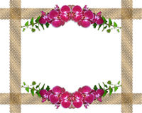 Pink orchids and ivy border royalty free stock photos