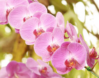 Pink orchids on the nature Royalty Free Stock Image