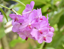Pink orchids on the nature Stock Images