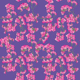 Pink orchids pattern Royalty Free Stock Photo