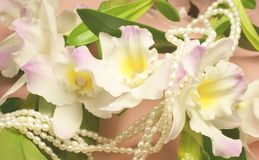 pink orchids and pearls Royalty Free Stock Photo