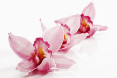 Pink orchids in a row Stock Images