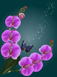 Pink orchids and single blue butterfly Royalty Free Stock Images