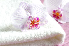 Pink orchids and spa aromatherapy abstract still life Royalty Free Stock Images