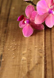 Pink orchids on wood board Stock Photo