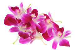 Pink orchis Stock Photos