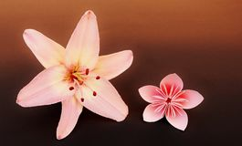 Pink origami flower and real lily. Stock Photos