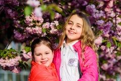 Pink is our favorite. Flowers soft tender bloom. Children enjoy spring garden. Sakura garden. Sisters walk park sakura. Trees. Kids pink flowers of sakura tree stock image