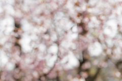 Pink out of focus flowers bokeh Stock Images