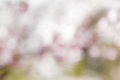 Pink out of focus flowers bokeh Stock Photo