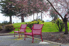 Free Pink Outdoor Benches Royalty Free Stock Photos - 12980658
