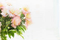 Pink pale peonies bunch in backlit on light background Stock Photos