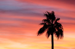 Pink Palm. A silhouette of a palm tree against a beautiful pink, orange, and yellow background Stock Photo