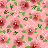 Pink pansies background Stock Photo