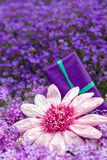 Pink paper flower and a present in front of purple flowers Royalty Free Stock Photo