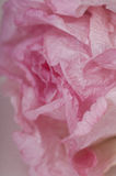Pink Paper Rose Stock Photo