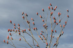 The Pink Parrot Tree royalty free stock photo