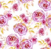 Pink pastel elegant roses on white background. Royalty Free Stock Photo