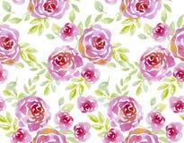 Pink pastel elegant roses on white background. Stock Image