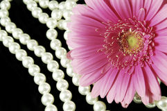 Pink and Pearls. Beautiful pink gerber daisy with a strand of pearls Royalty Free Stock Photography
