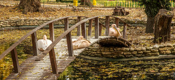 Pink Pelican resting on a wooden bridge across the lake in the a Royalty Free Stock Photos