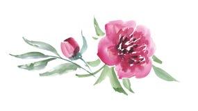 Pink peon flower Royalty Free Stock Photo