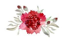 Pink peon flower Royalty Free Stock Photos