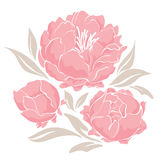 Pink peonies Royalty Free Stock Photos