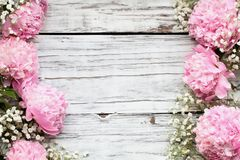 Pink Peonies and Babys Breath Flowers over a White Wooden Background. Pink Peonies and Baby`s Breath flowers over a white rustic wood table background  with copy royalty free stock image
