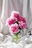 Pink Peonies Stock Photography
