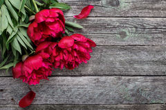Pink peonies flowers on rustic wooden background. Selective focus. Place for text, top view stock photos