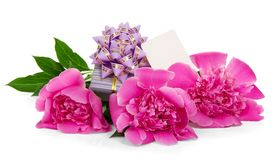 Pink peonies, the gift box decorated with ribbon Stock Images