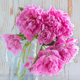 Pink peonies in a glass carafe Stock Images