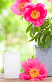 Pink peonies in metal vase and empty card for letter Stock Image