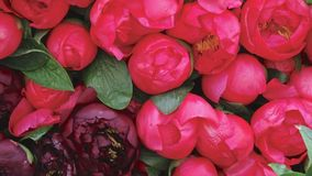 Pink peonies (Paeonia) for sale on a market stall. Bunches of pink peonies (Paeonia) for sale on a market stall. Landscape photo, close up, shows detail Royalty Free Stock Image