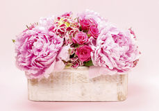 Pink peonies and roses in wooden box. Stock Images