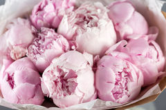 Pink peonies in vase. retro styled photo. close-up Royalty Free Stock Image