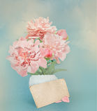 Pink peonies in white vase. Turquoise background Stock Images