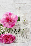 Pink peonies on white vintage birdcage Royalty Free Stock Photography