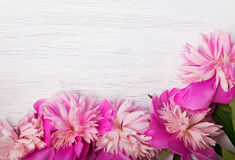Pink peonies on white wooden background Stock Image