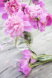 Pink peonies on wooden background Stock Photos