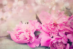 Pink peonies on wooden background Royalty Free Stock Photography