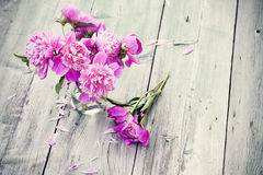 Pink peonies on wooden background - vintage photo Royalty Free Stock Photography
