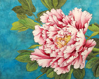 Pink peony on a blue background Stock Photos
