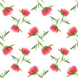 Pink peony bud on white background. Seamless watercolor pattern Stock Images