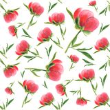 Pink peony bud on white background. Seamless watercolor pattern Royalty Free Stock Image